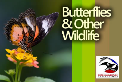 Butterflies & Other Wildlife