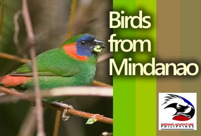Birds from Mindanao