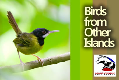 Birds from Other Islands