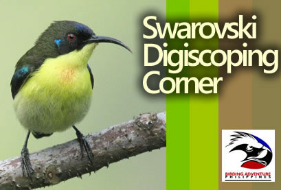 Swarovski Digiscoping Corner