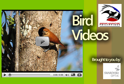 philippine bird videos