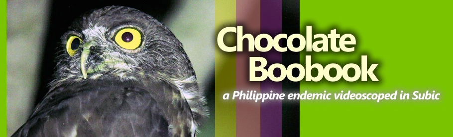 Chocolate Boobook [HD]