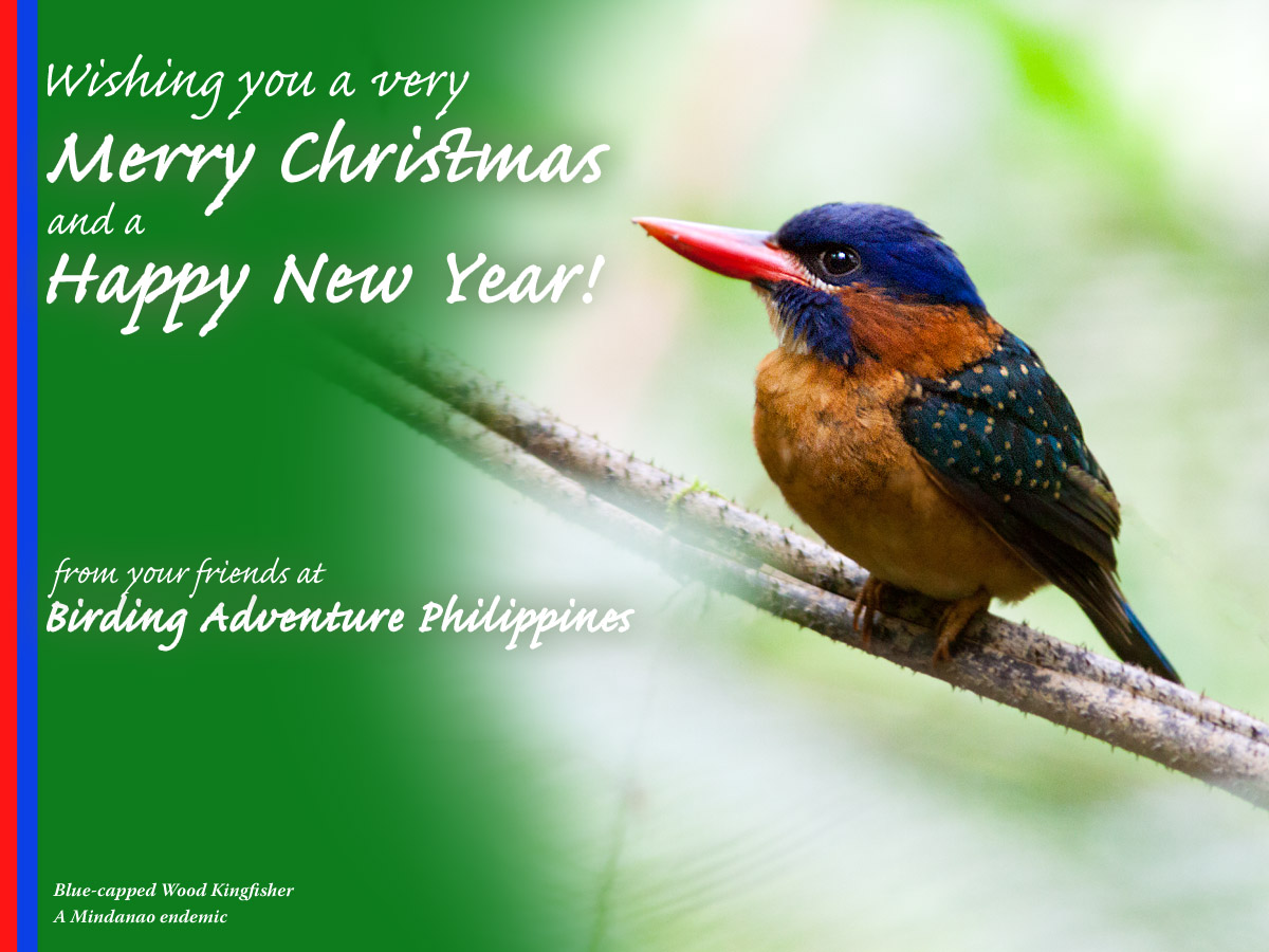 Merry Christmas and Happy New Year from your friends at Birding Adventure Philippines!